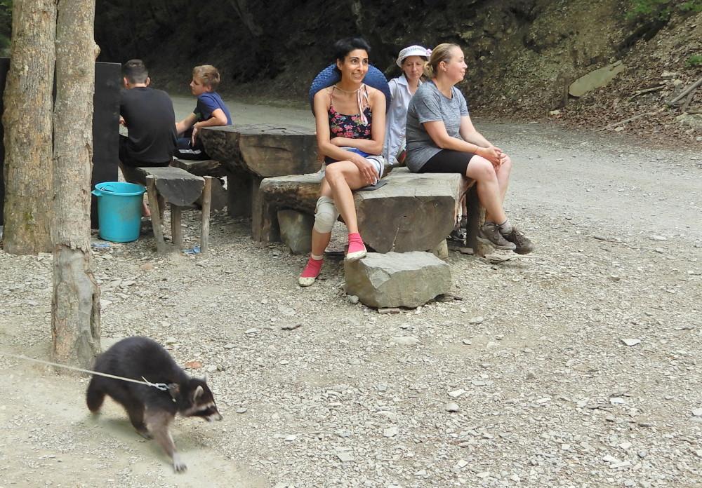 Источник, енот и мы  на Кабардинском перевале...